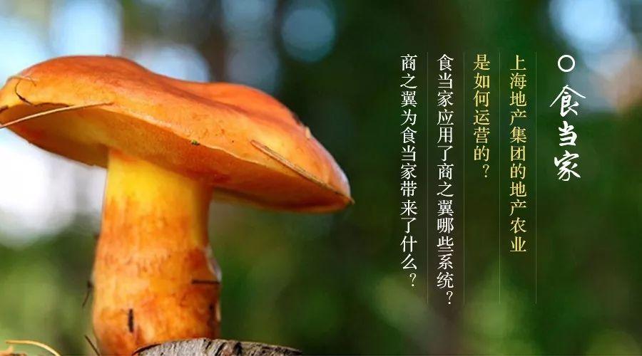 客戶案例 | 上海地產集團教給你如何玩轉農產品電商